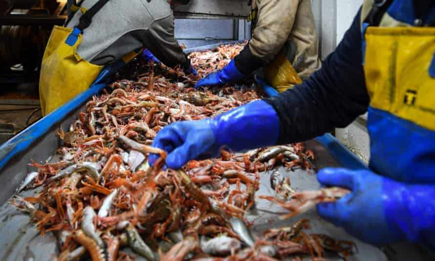 EU scotland seafood january exports