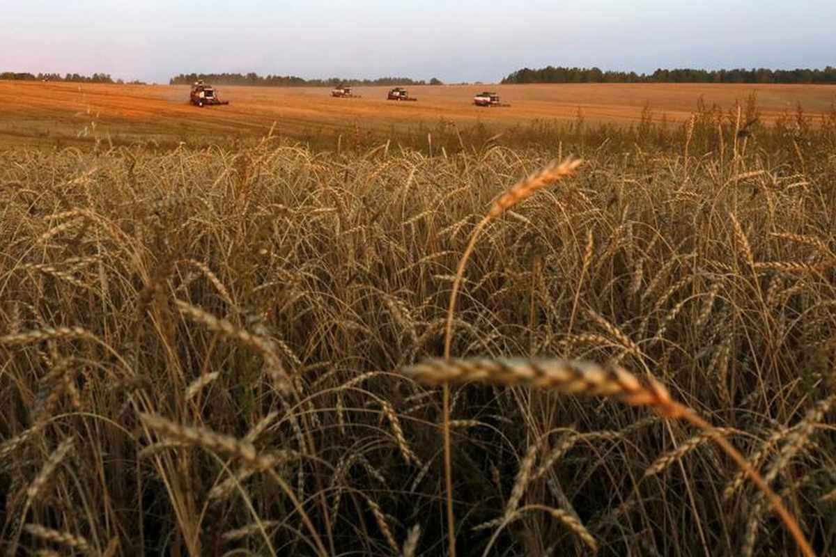 US wheat crop supply usda