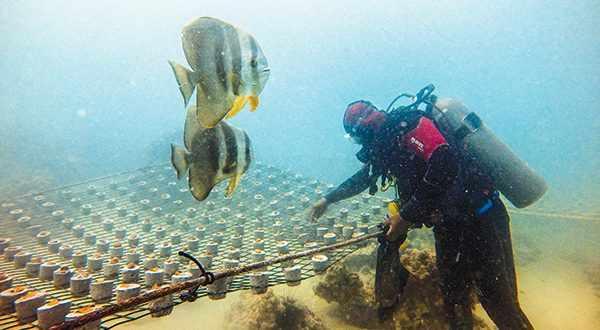 abu-dhabi coral reef region project