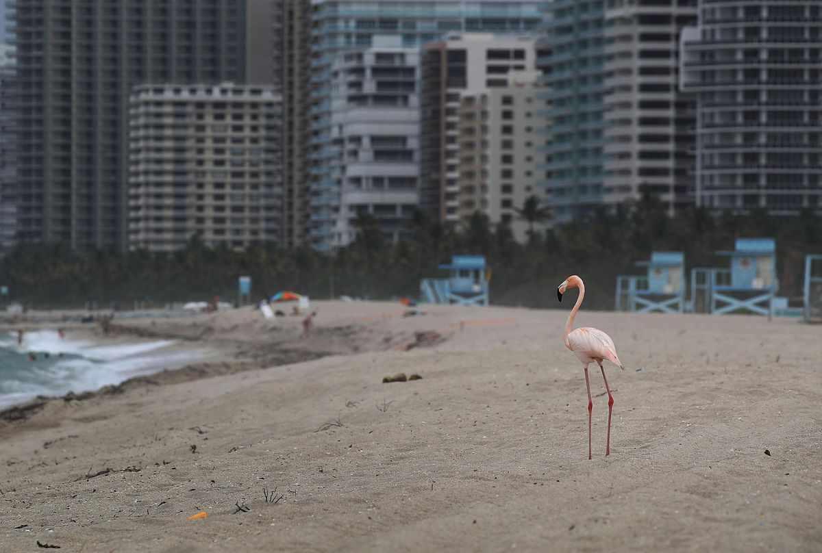 airline florida united joins flock