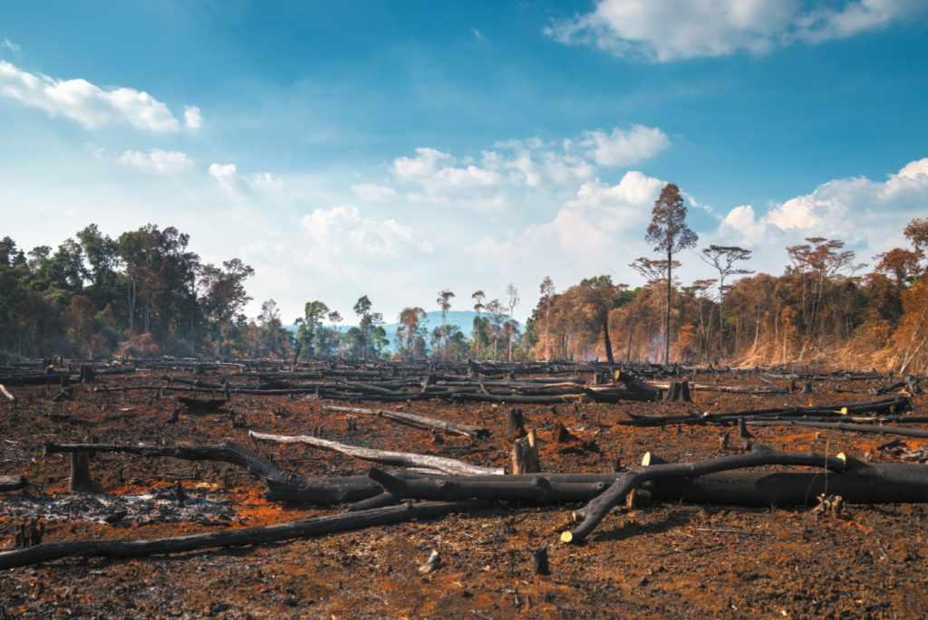 china banks global deforestation companies