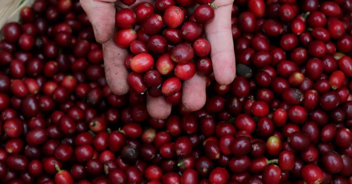 coffee prices cold brazilian