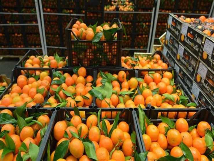 egypt japan shipment oranges egyptian