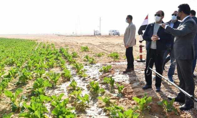 egypt land reclamation state owned