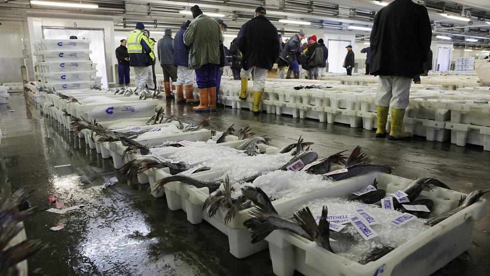 fish scottish exporter story
