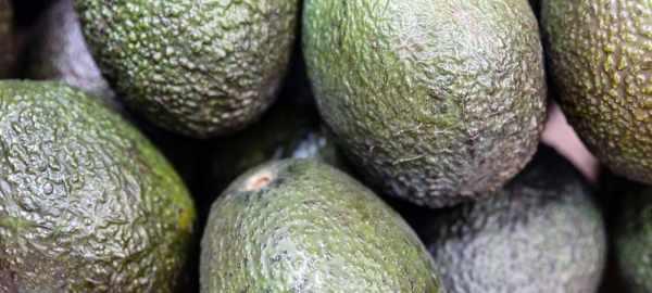 food, avocado, nursery, park, people,