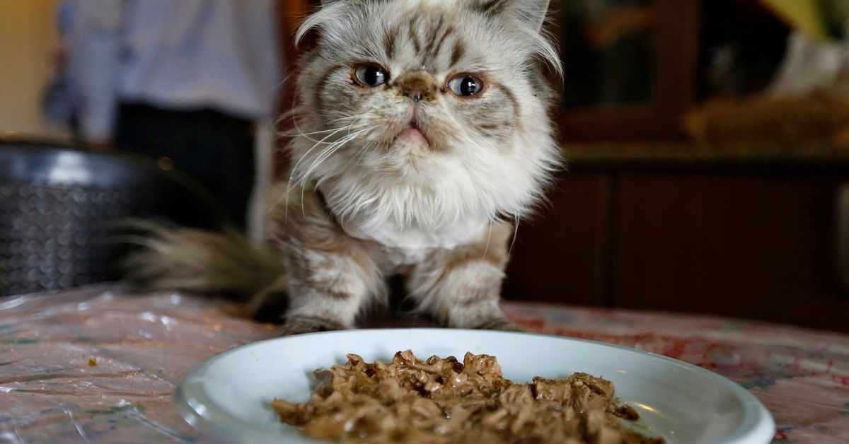 food, pet, owners, kibble, treats,