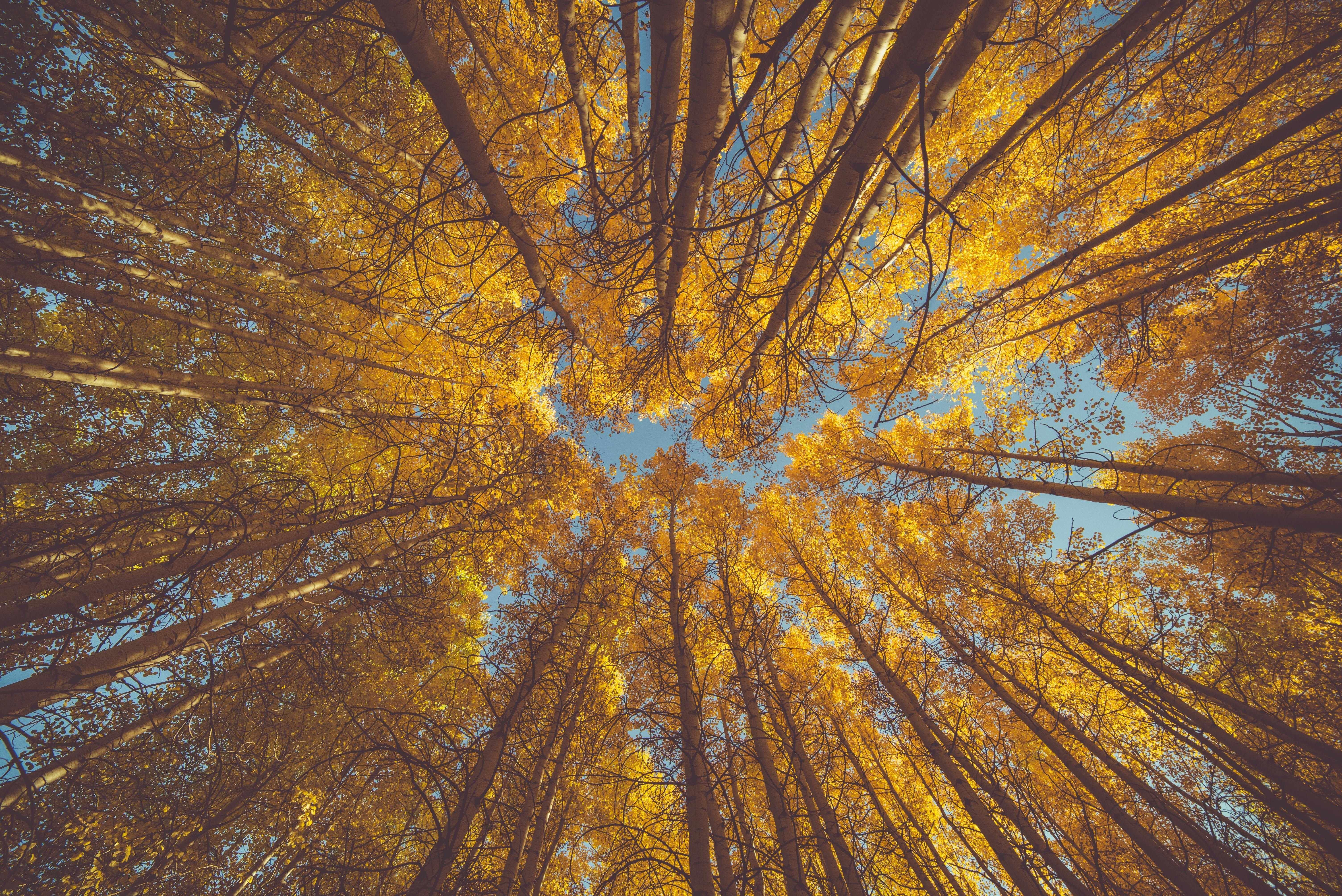 forests regenerative economy