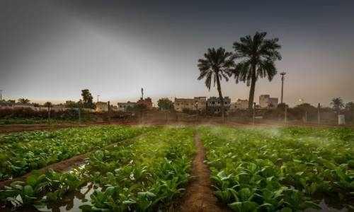 green, campaign, area, bahrain, kingdom,