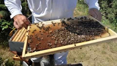 honey, croatia, bee, made, family,