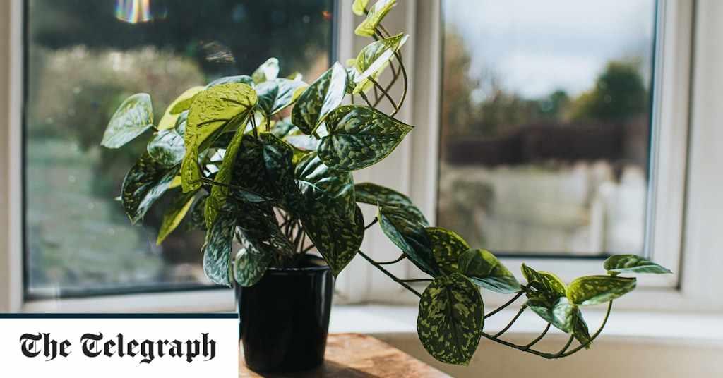 houseplants insider tips them plants