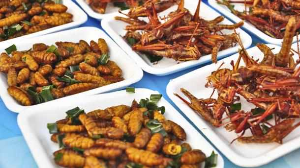 insect, edible, market, insects, menafn,