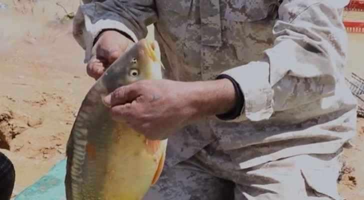 jordan fish water harvesting roya