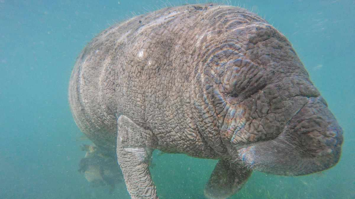 manatee florida officials federal whoever