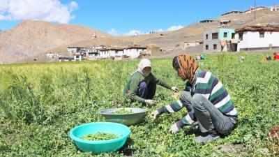 mena, natural, farming, himachal,