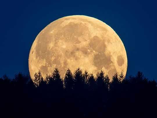 moon human behaviour blood lunar