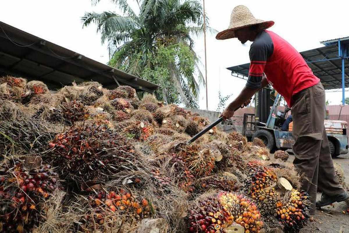 oil palm production stocks malaysia