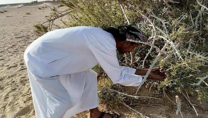 oman environment authority seed planting