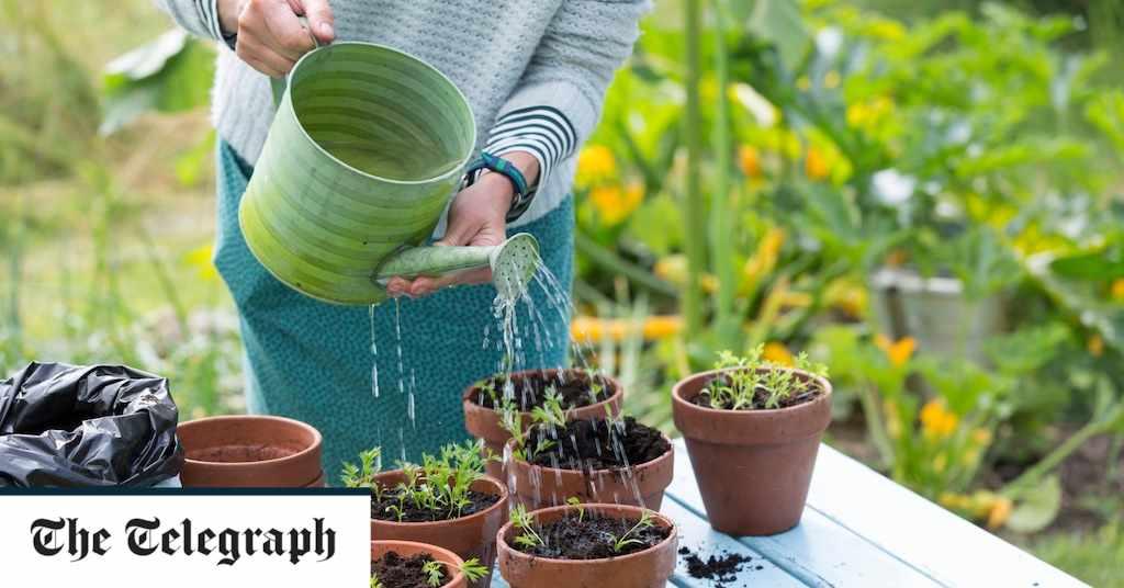 peat, gardeners, environment, alternatives, media,