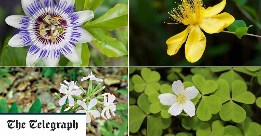 plants, health, warning, flowers, garden,