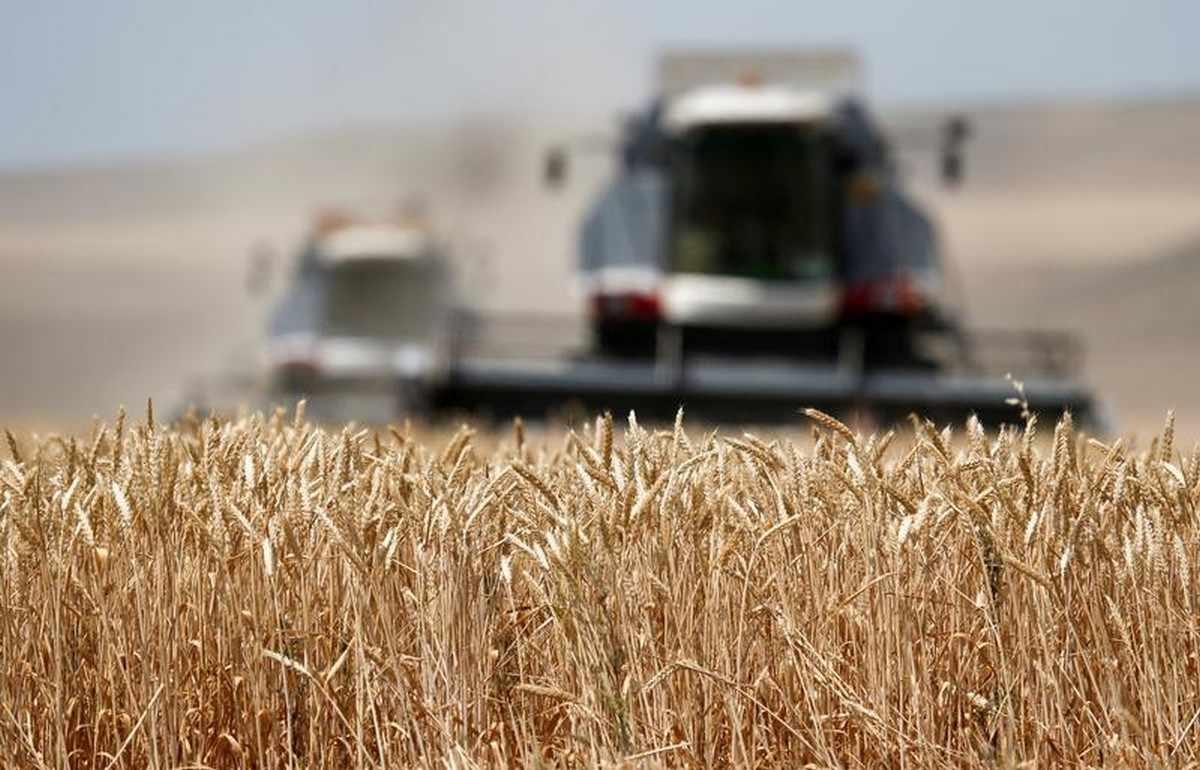 putin food prices grain sector