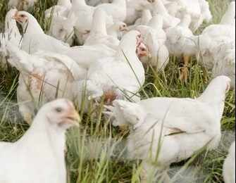 saudi-arabia brazil poultry plants jbs
