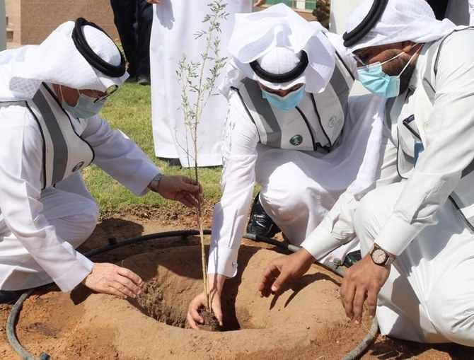 saudi trees arabia