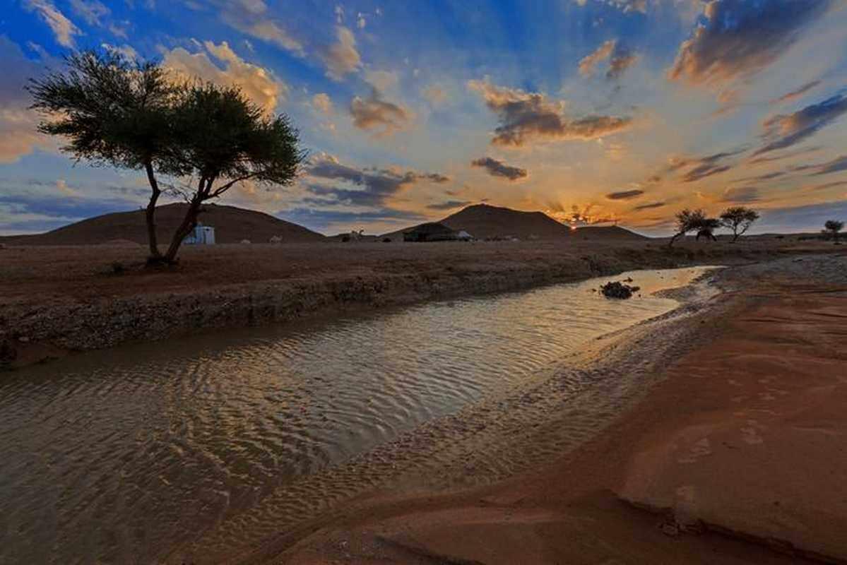 saudi, arabia, plant, trees, desert,