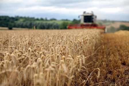 saudi-arabia wheat sago tonnes america