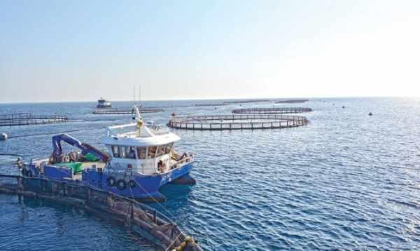 saudi china aquaculture society reports