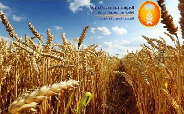 saudi sago wheat investors amount