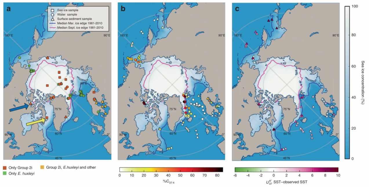 sea ice algae climate past