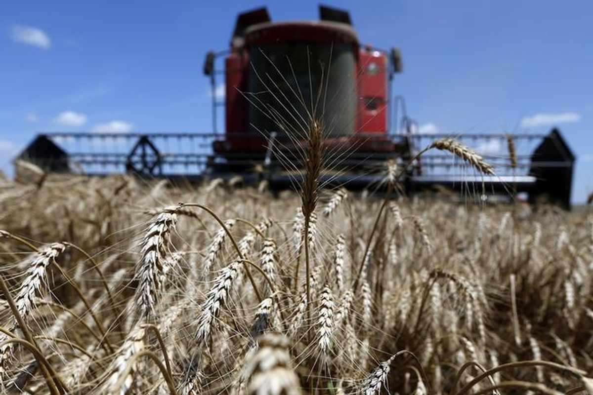 soybeans, corn, global, supply, wheat,