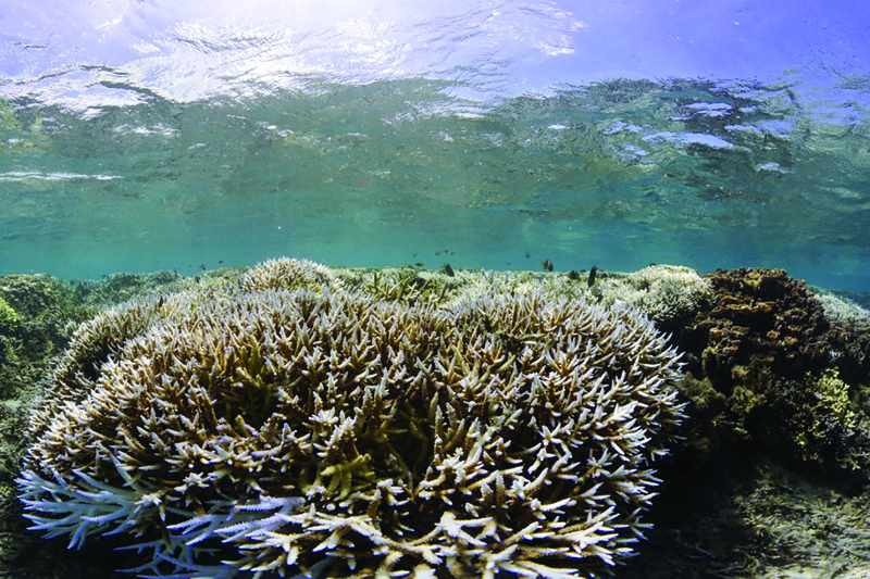 species marine poleward climate reported