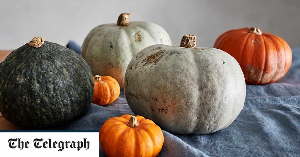 squash, because, varieties, vegetable,