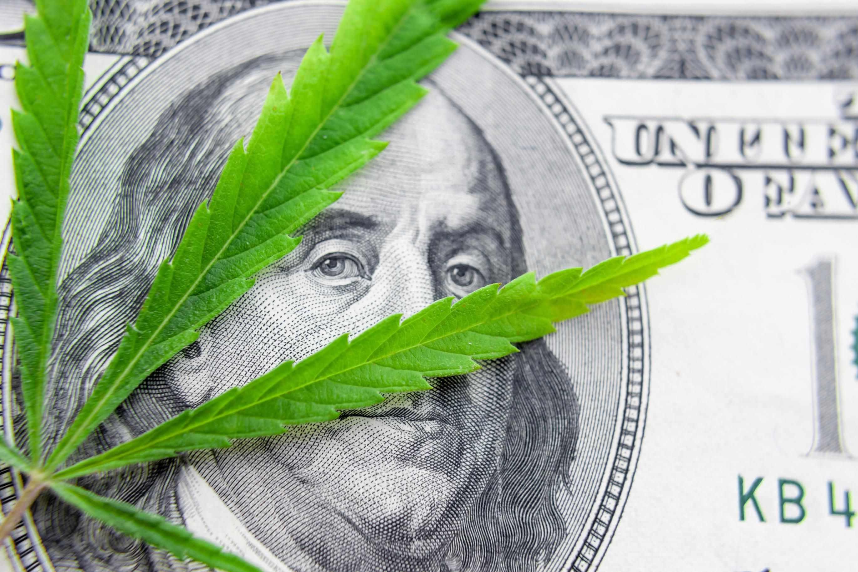 state market legalizes pot squash