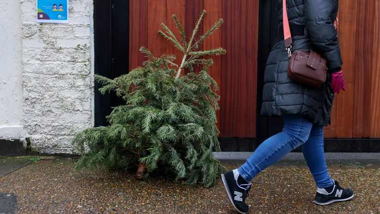 trees, christmas, labour, also, demand,
