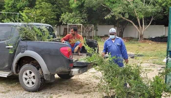 wild trees dhofar authority planted