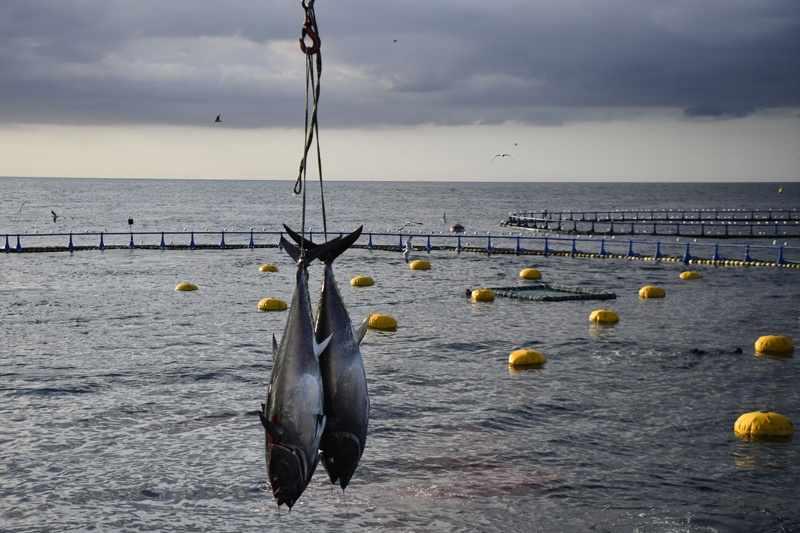 wto fisheries trade organization towards